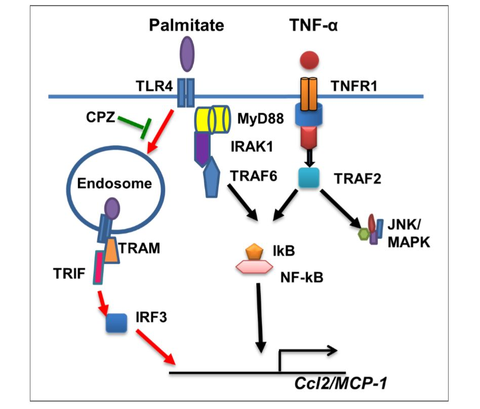 Irf3 Is A Key Regulator Of Metabolic Inflammation, Insulin Resistance And Disruption Of Glucose Homeostasis