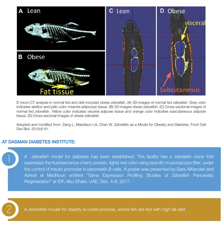 Zebrafish As A Model For Obesity And Diabetes