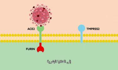 Combating SARS-CoV-2 with Precision Medicine